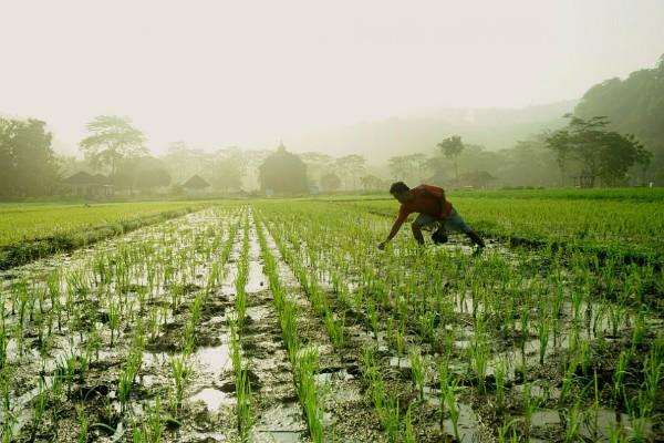 agriculture ministry examining report on committee to double income of farmers