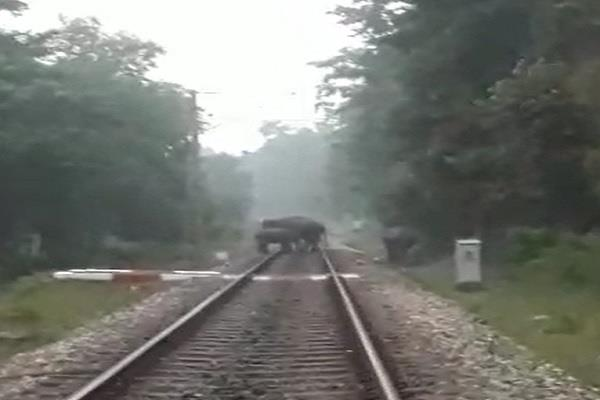 the survivors elephants crossing railway track with sense forest personnel
