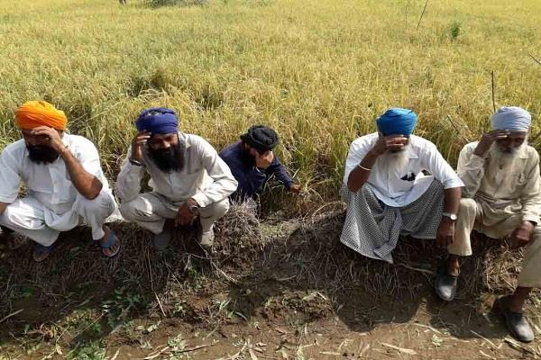 gurdaspur untimely rains  paddy  crop hailstorm