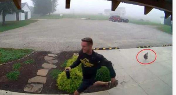 video of man getting chased by a chicken goes viral