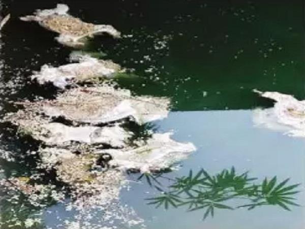 water tank in alampur killed 29 monkey