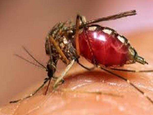 dengue sting does not stop at bilaspur