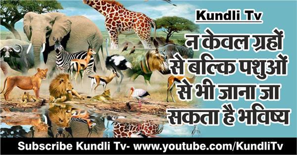 know your future through animals
