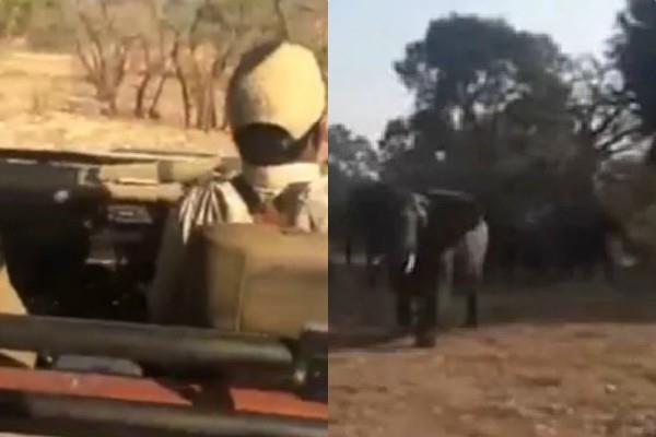 south africa jungle safari elephant attacks tourist vehicle vedio viral