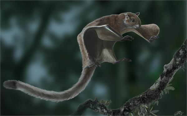 oldest fossil found of a flying squirrel