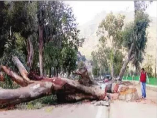 in dhalpur going bite to risk made trees