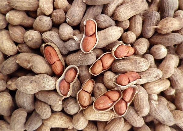 सर्दियों में जरूर खाएं मूंगफली, इससे मिलेंगे आपको 8 फायदे