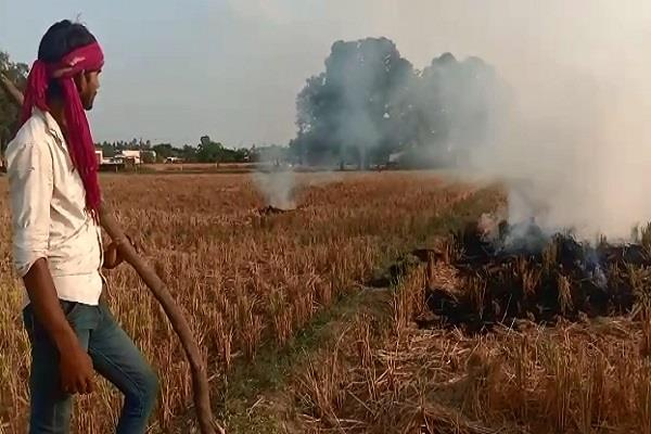 despite the government effort farmers continue poisoned environment