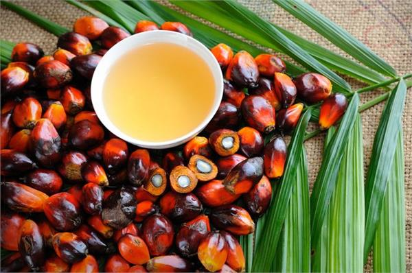 oil mills merchants demand increase in import duty on refined palmoline oil