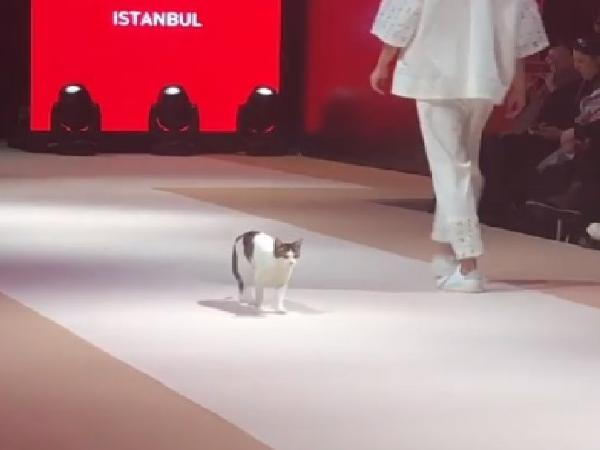 cat steals the show after crashing fashion event in istanbul video viral