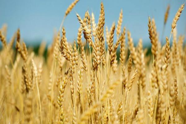 union cabinet approves enhanced msp for rabi crops