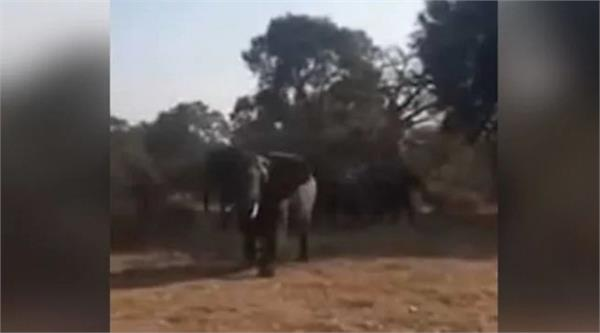 south africa jungle safari elephant attacks tourist vehicle viral video