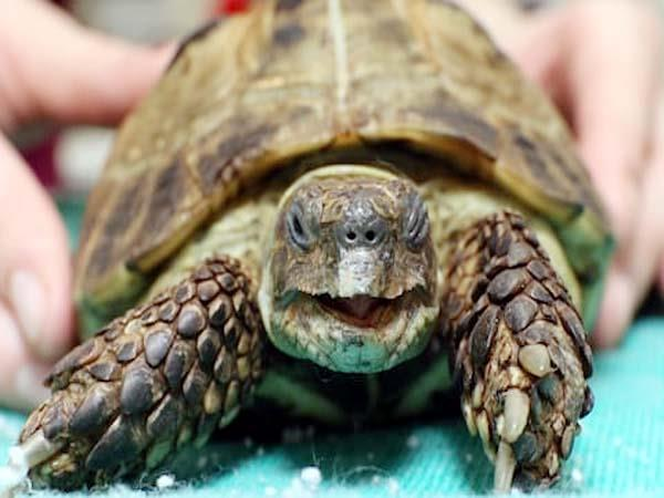 7 tortoise recovered from allot flat of former principal