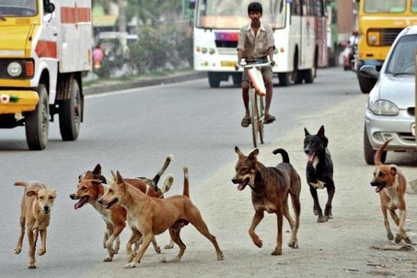 the rising incidence of stray dogs people are overwhelmed with fury and fear
