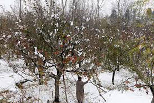 3 nov snowfall announce natural calamity