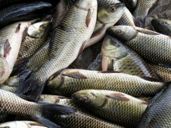 trout fish will also enjoy other states of the country