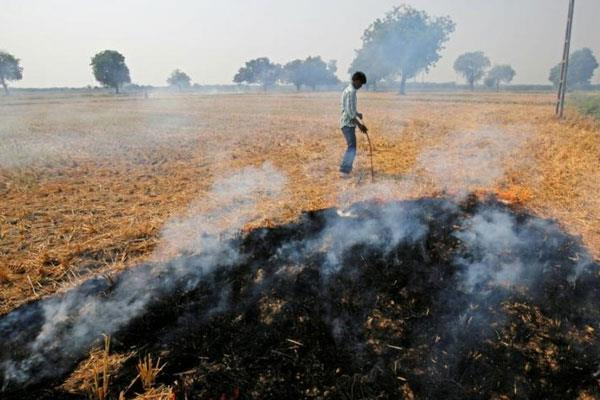 punjab cracks down on paddy farmers improve air quality