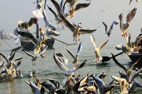 syrian birds reaching the beach