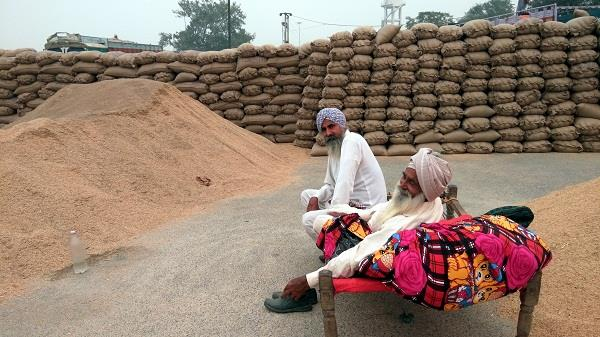 lack of procurement of paddy