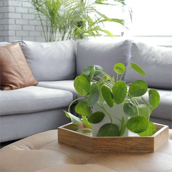 इन 5 पौधों को घर में लगाने से बरसती है मां लक्ष्मी की कृपा