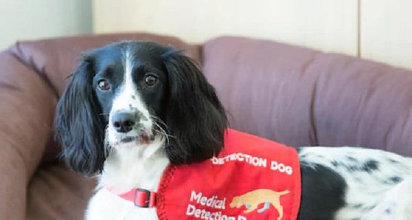 now sniffer dogs could detect malaria in people