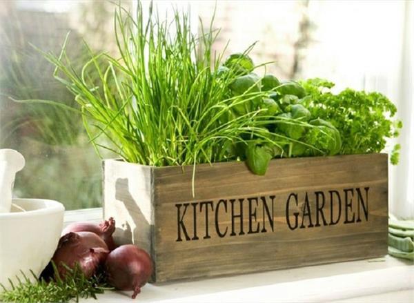 Winter Garden: 30 दिनों में घर पर ही उगाएं ये 5 सब्जियां