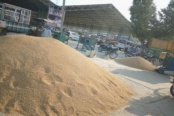 rast house facility will be available in new grain market soon