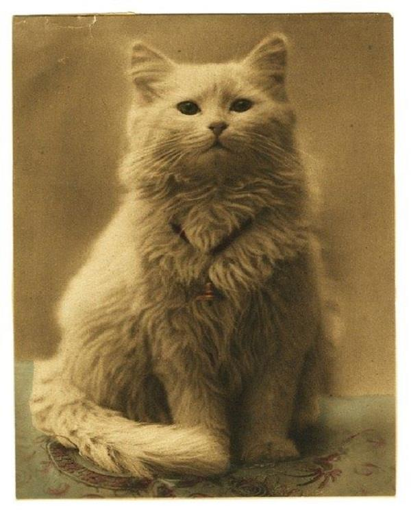 one of the first cat photos ever taken 1880s