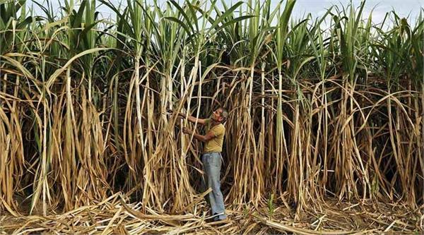 sugarcane farmers want 400 rupees per quintal