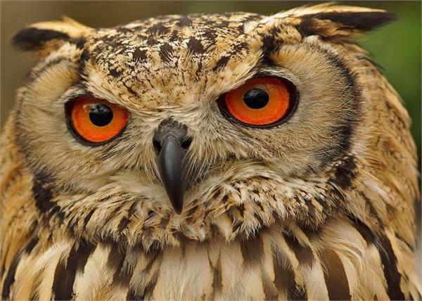 goddess of wealth lakshmi s ride on the owl