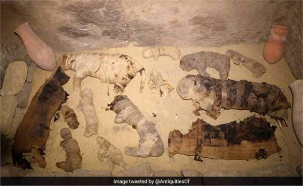 dozens of cat mummies found in 6000 year old tombs