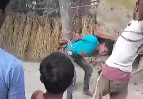 people banging the innocent tree in the charge of theft