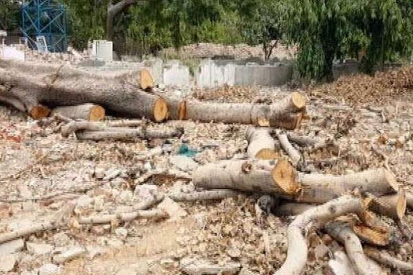 odisha government blames thousands of trees for beer plant