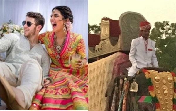peta accuses priyanka nick for using elephant horse at hindu wedding