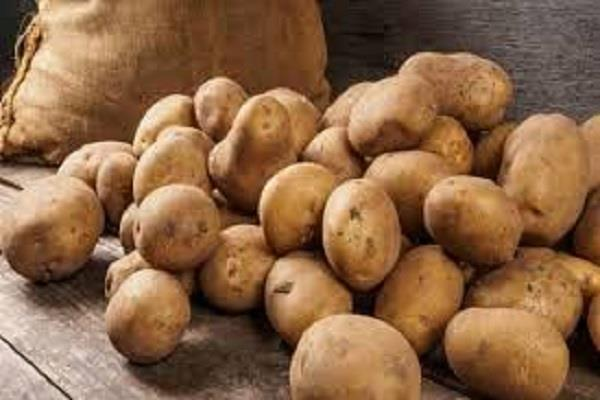 punjab announces freight subsidy for potato farmers