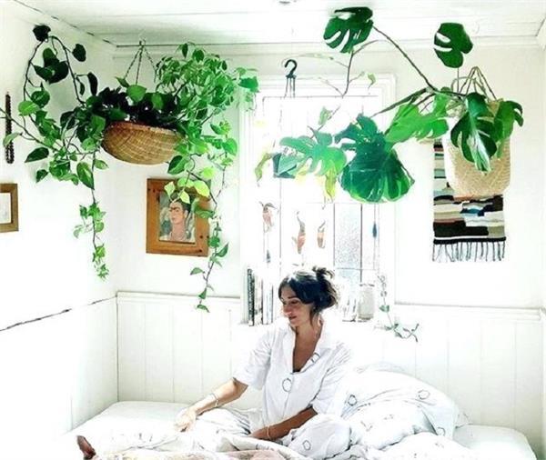 सुकून भरी नींद के लिए बैडरुम में लगाएं ये 5 पौधे