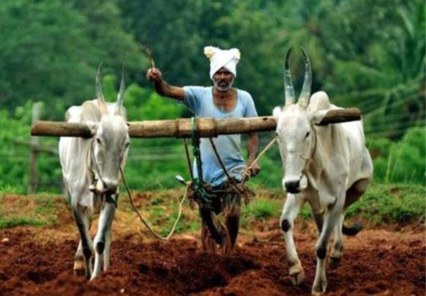 is debt forgiveness the only option for the miserable situation of farmers