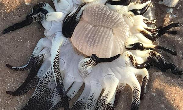 alien sea creature s mass of tentacles baffles locals after washing up