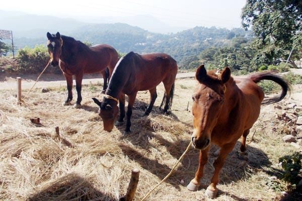 nahan horse police patrol