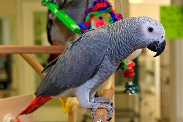 mistress was out of the house parrot bought ice cream from amazon alexa