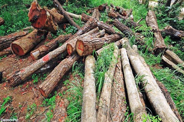 retired forest guard charge sheet in illegal forest cut case