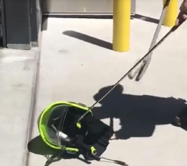helmet horror as fireman finds a snake hidden inside