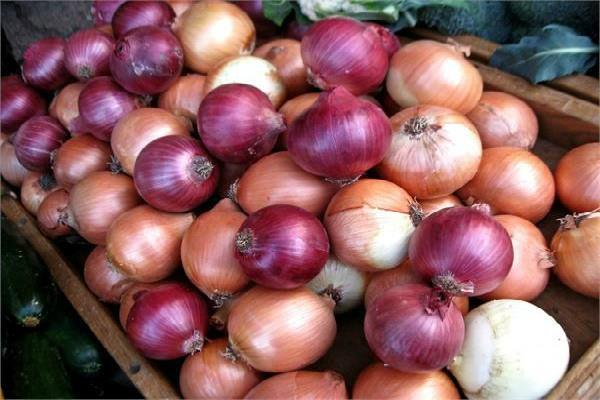 minimum export value of onion reduces to 150 dollar a tonne