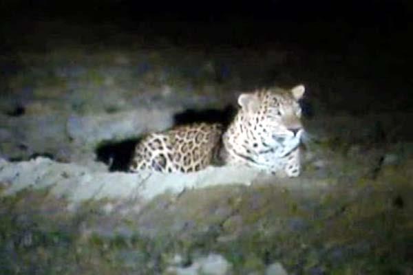 leopard caught in cctv of school  flying senses of people