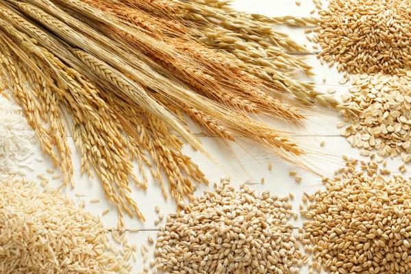gst expects to save rs 1 600 crore every year in grain procurement