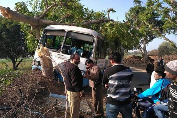 bus collides with a tree many injured