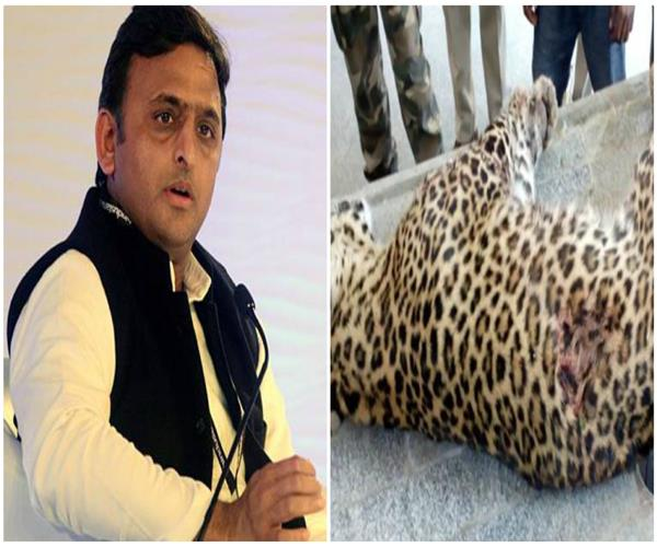 akhilesh speaks on leopard killed by police
