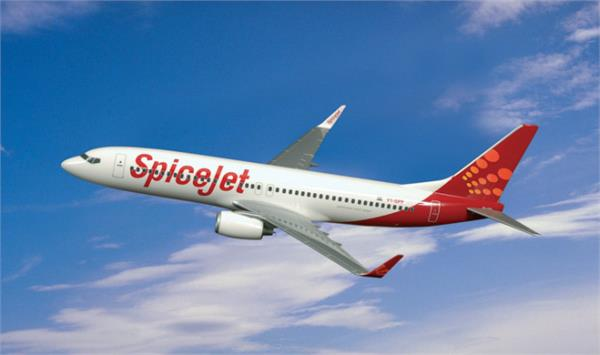 spicejet s profit surged to rs 239 4 crore