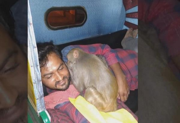 bengaluru drunk monkey creates ruckus at bar