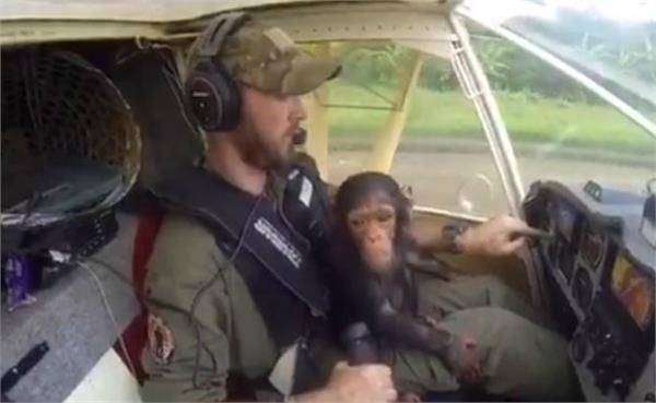 the chimpanzee enjoying in the helicopter